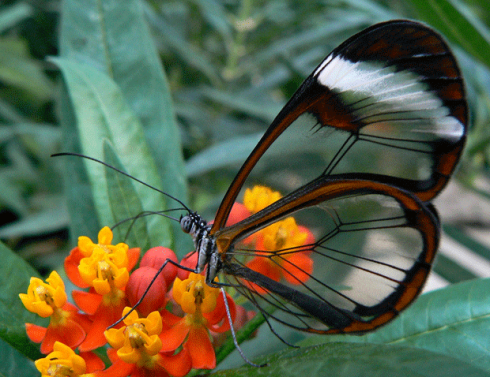 animal-photography-insect-butterfly