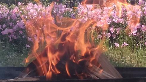 Flames_garden_fire.jpg