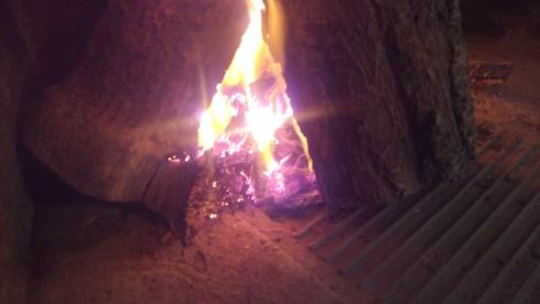 Flames_tree_tzaki.jpg