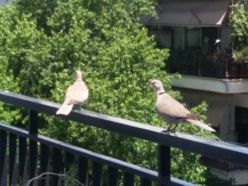 birds_balcony