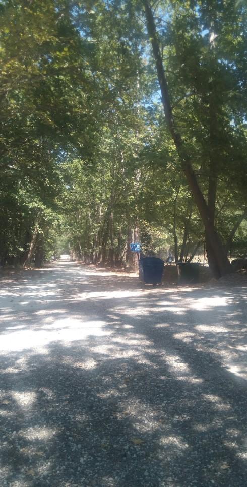 trees_road_platania_green
