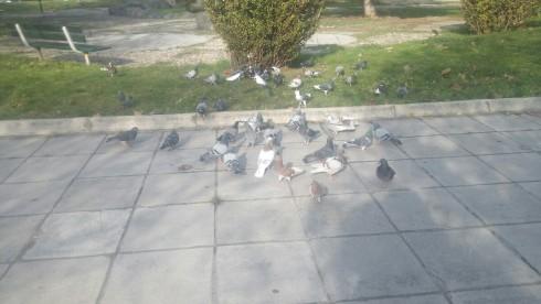 birds_peristeria