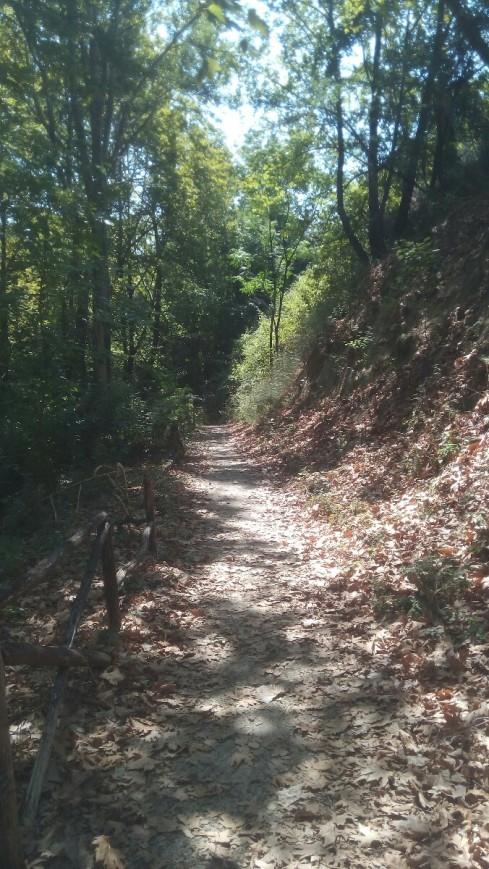 walk_forest_monopati.jpg