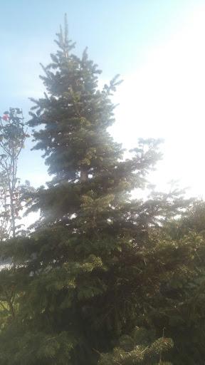 elato_tree