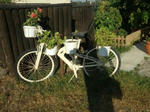 bycicle_white_flowers.jpg