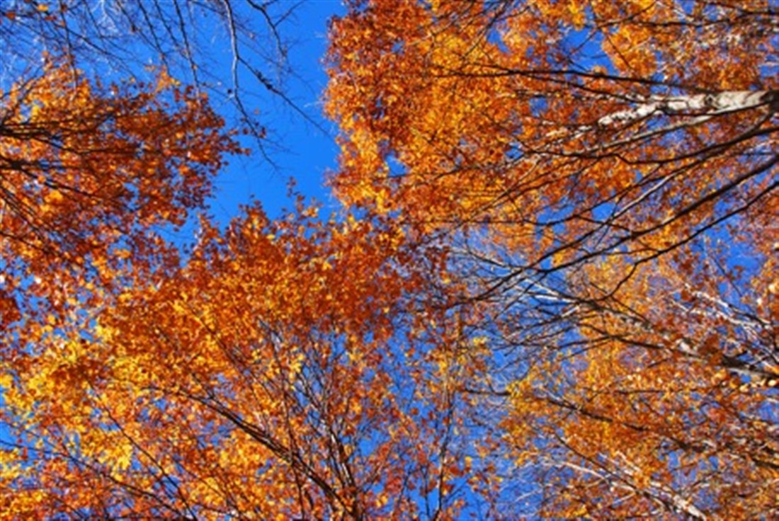 automn_yellow_tree_JohnDi