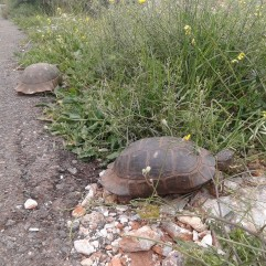 turtle_race_life_road_JohnnyDi