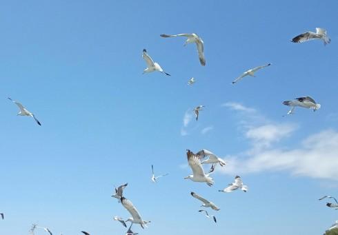 glaros_birds_sky_fly.jpg
