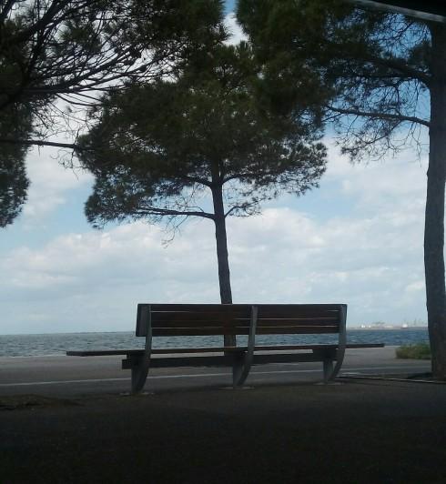 pagkaki_paralia_tree.jpg