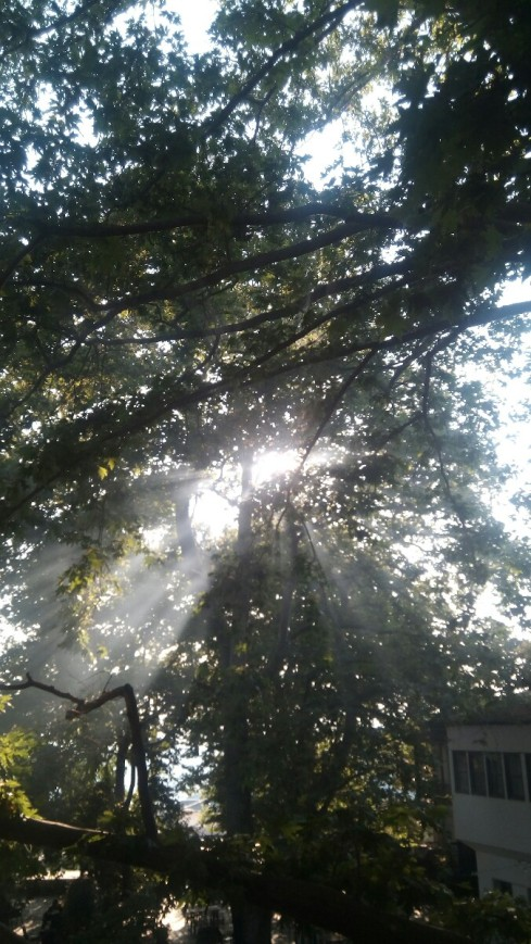 green_fog_sun_aktides_platanos_tree.jpg