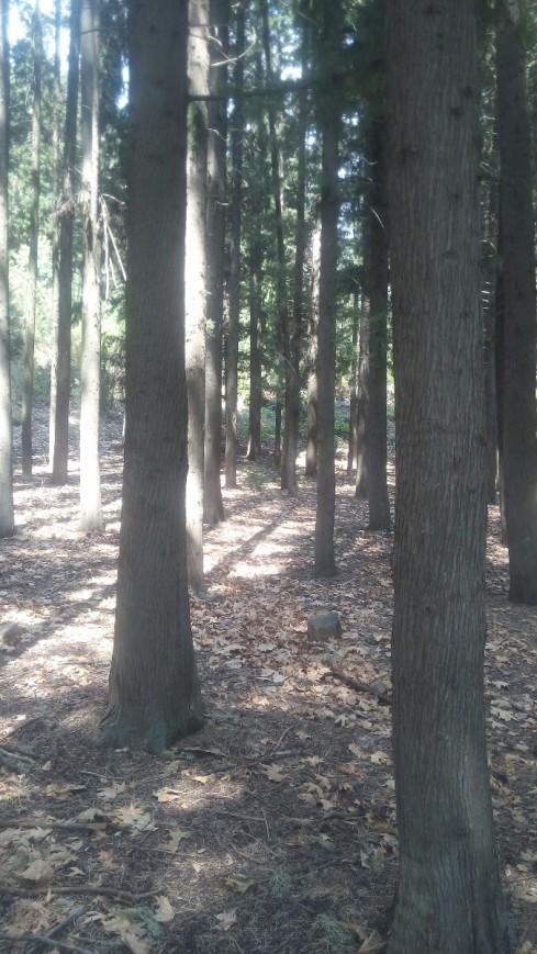 forest_trees_kormoi.jpg